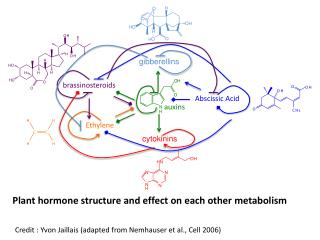 Plant  hormone structure and effect on each other  metabolism
