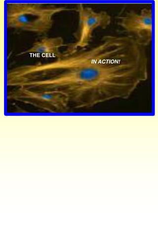 THE CELL IN ACTION!