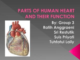PARTS OF HUMAN HEART AND THEIR FUNCTION