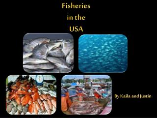 Fisheries i n the USA