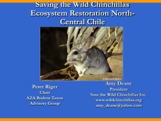 Saving the Wild Chinchillas Ecosystem Restoration North-Central Chile