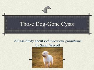 Those Dog-Gone Cysts