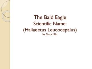 The Bald Eagle Scientific Name: (Haliaeetus Leucocepalus) by: Sierra Mills