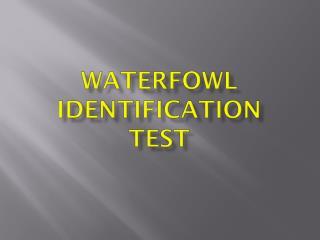 Waterfowl Identification Test