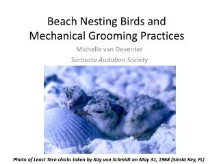Beach Nesting Birds and Mechanical Grooming Practices