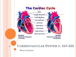 Cardiovascular System p.  347-352