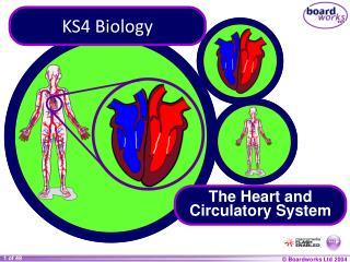 KS4 Biology