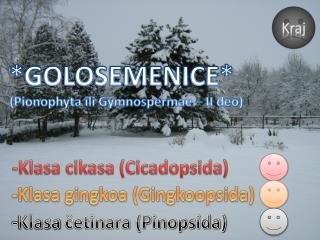 * GOLOSEMENICE * (Pionophyta ili Gymnospermae – II deo)