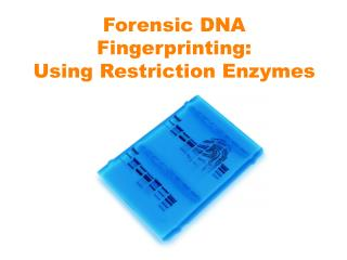 Forensic DNA Fingerprinting:  Using Restriction Enzymes