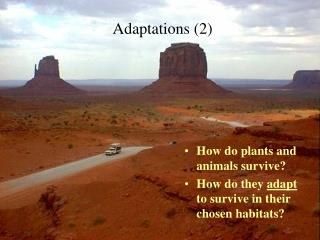 Adaptations 2