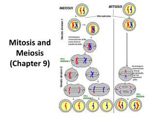 Mitosis and Meiosis  (Chapter 9)