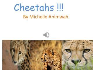 Cheetahs !!!