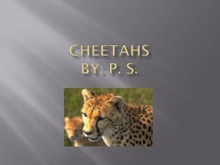 Cheetahs by: P. S.