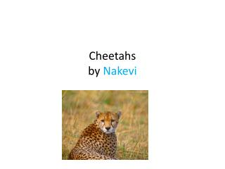 Cheetahs by  Nakevi