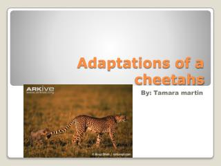 Adaptations of a cheetahs