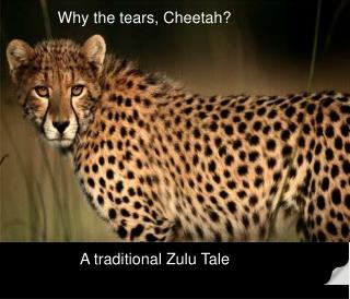 Why the tears, Cheetah?