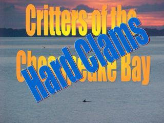 Hard Clams or Quahogs