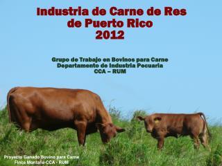 Proyecto  Ganado  Bovino para  Carne    Finca Montaña  CCA - RUM