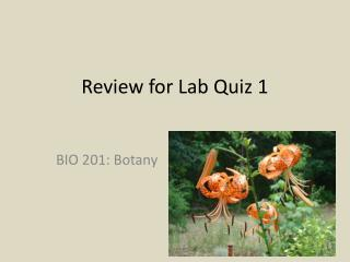 Review for Lab Quiz 1