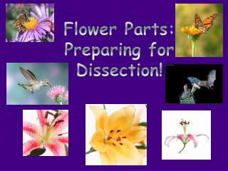 Flower Parts: Preparing for  Dissection!