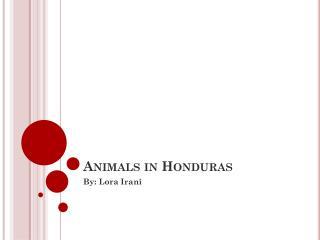 Animals in Honduras