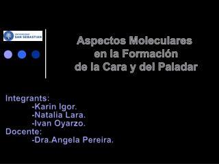 Aspectos Moleculares  en  la Formación de la Cara y del Paladar