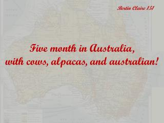 Five month in Australia,  with cows, alpacas, and australian!