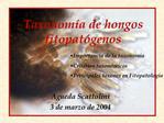 Taxonom a de hongos fitopat genos