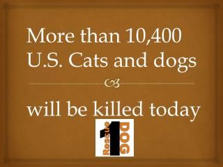 More than 10,400 U.S. Cats and dogs will be killed today