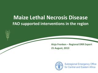 Maize Lethal Necrosis Disease FAO supported interventions in the region