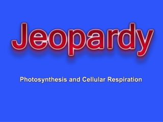 Photosynthesis  Cell Respiration Jeopardy