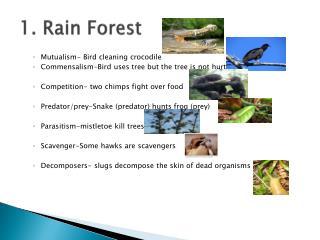 1. Rain Forest