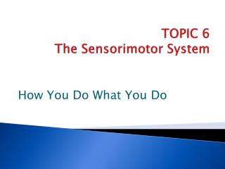 TOPIC  6 The  Sensorimotor  System