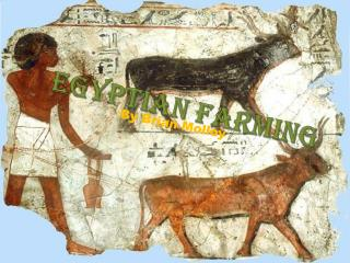 Egyptian Farming