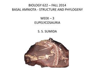 BIOLOGY 622 – FALL 2014 BASAL AMNIOTA - STRUCTURE AND PHYLOGENY WEEK – 3 EUPELYCOSAURIA