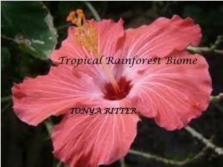 Tonya  RItter