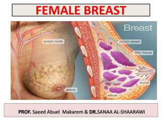 FEMALE BREAST
