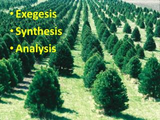 Exegesis Synthesis Analysis