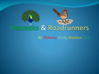 Peacocks  &  Roadrunners