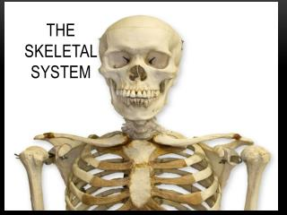 The Skeletal  S ystem