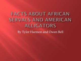 facts about African servals and American alligators