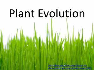 Plant Evolution