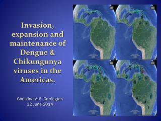 Invasion, expansion and maintenance of Dengue  &  Chikungunya  viruses in the Americas.