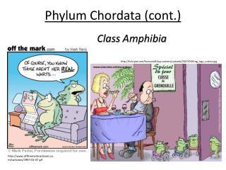 Phylum  Chordata (cont.)