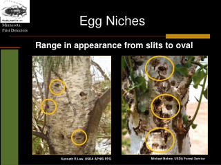 Egg Niches