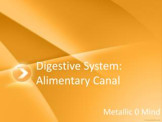 Digestive System: Alimentary Canal