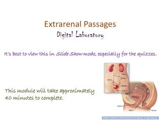 Extrarenal  Passages Digital Laboratory