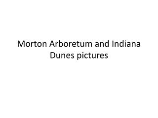 Morton Arboretum and Indiana Dunes pictures