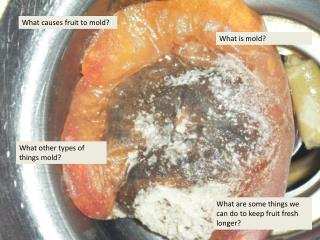 What causes fruit to mold?