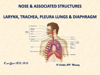 nose &  assocIated structures Larynx ,  trachea ,  pleura lungs  &  dIaphragm
